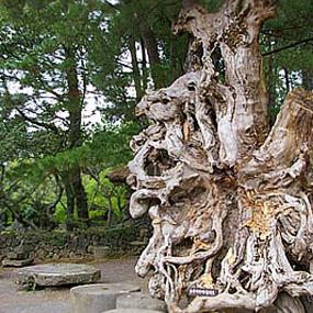 목석원여행정보 http://www.travelkor.com