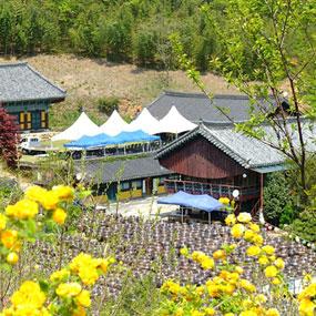 서운암들꽃축제 여행정보 상세소개