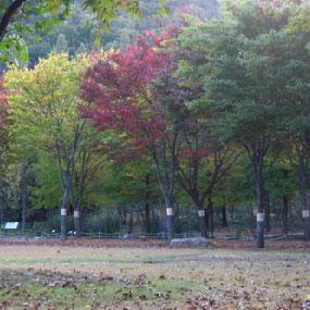 대구수목원여행정보 http://www.travelkor.com