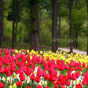 아침고요수목원여행정보 http://www.travelkor.com