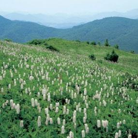 태백산도립공원여행정보 http://www.travelkor.com