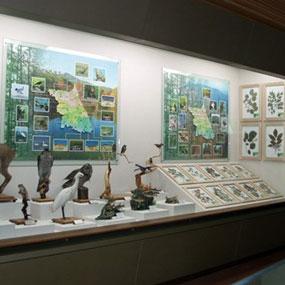 강원도산림박물관여행정보 http://www.travelkor.com