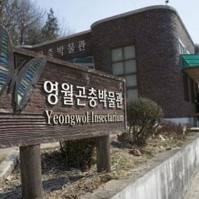영월곤충박물관여행정보 http://www.travelkor.com