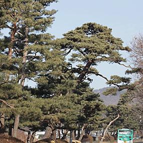 이목동 노송지대 여행정보 상세소개