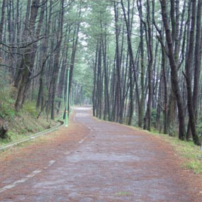 한라수목원여행정보 http://www.travelkor.com