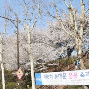 동대문구 봄꽃축제 여행정보 상세소개