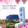 태백산 철쭉제 여행정보 상세소개