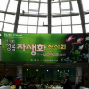 정읍 자생화축제 여행정보 상세소개
