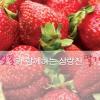 삼랑진 딸기 한마당 대축제 여행정보 상세소개