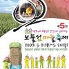 보물섬 마늘축제 여행정보 상세소개