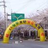 청풍호반 벚꽃축제 여행정보 상세소개